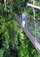 Poring Hot Springs Canopy Walk